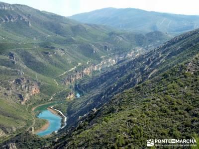 Sierra de Enmedio - Río Guadiela;arbol del tejo agencias de senderismo madrid rutas de senderismo c